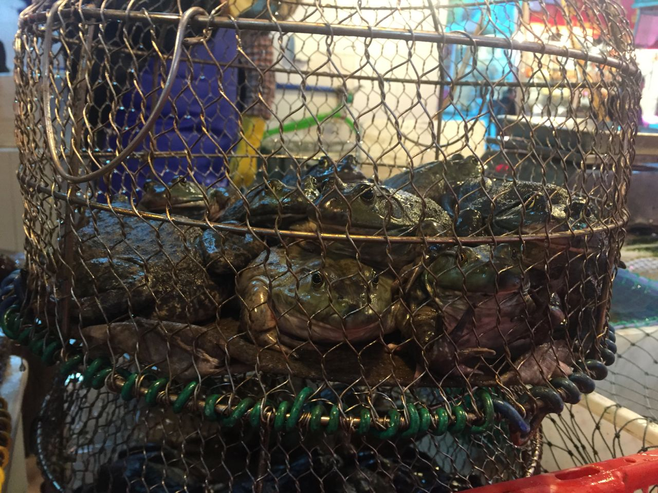 china wet market frogs